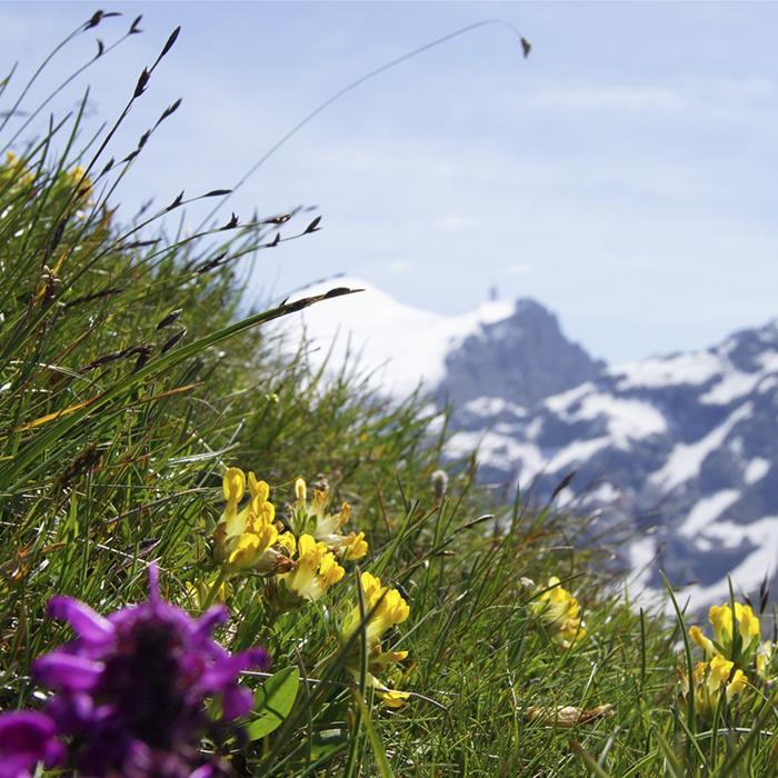 Panorama Fruehling 1